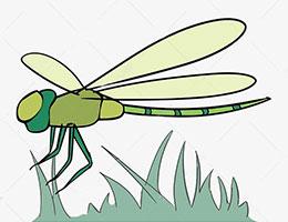 固执的蜻蜓