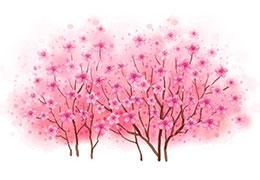 小猴的桃树