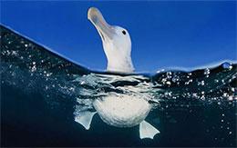 小海鸥学飞翔(天空和海洋)