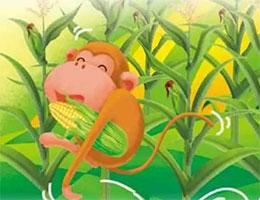 小猴子掰玉米(小猴子摘桃子)