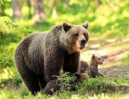 熊妈妈教子