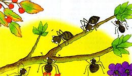 开心的小蚂蚁