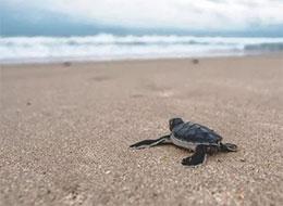 突围的小海龟