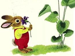 I am a bunny——我是一只小兔子(四季里的小兔子)