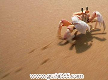 母蟹教小蟹走路