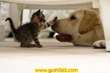 猫与狗谁更厉害